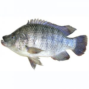 Whole Tilapia (500-600g)